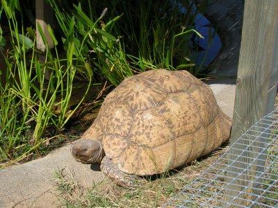 La vallée des tortues a Sorede!